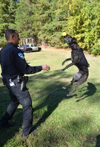 Officer David Funk plays with Police Dog Stich. Photo courtesy of Caroline Levine.