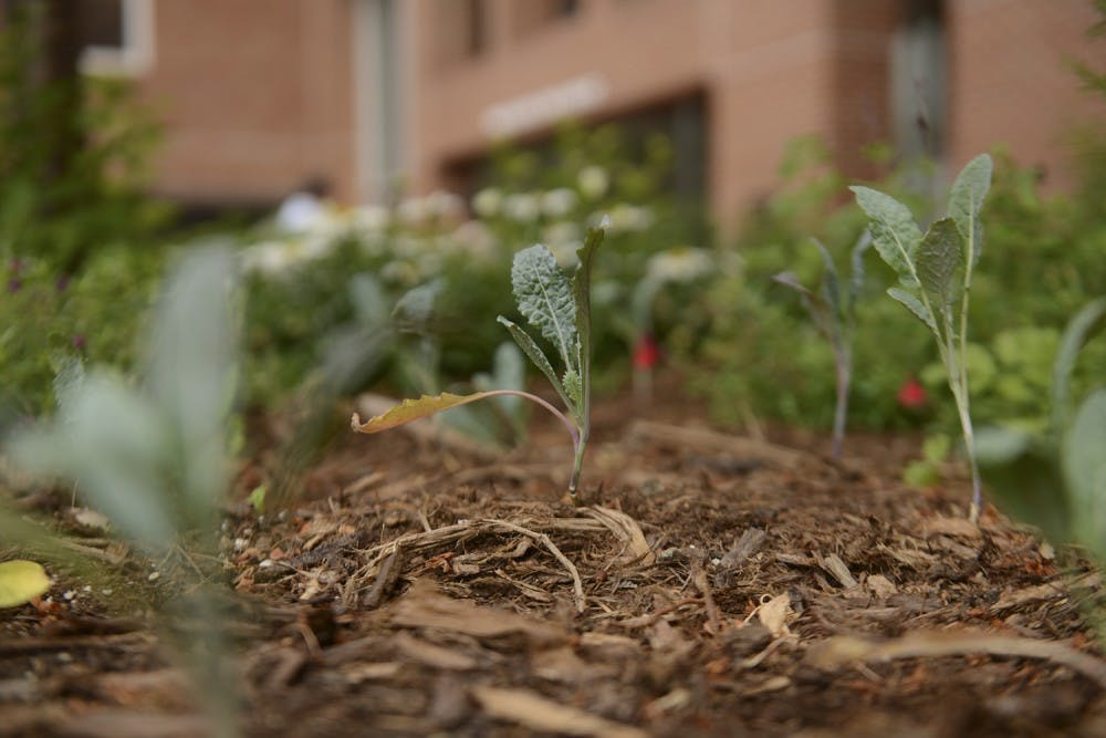 Earth Week participants on campus engage with the environment