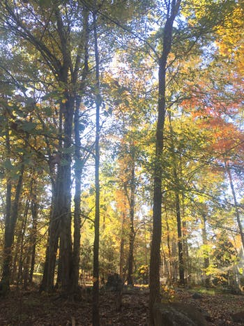 The Cochrane Property became a nature preserve on Nov. 9, 2019.