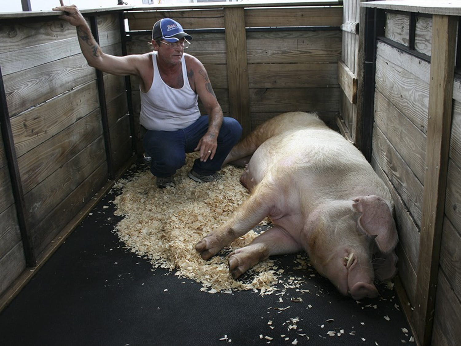 John Wadsworth, with Bubba. John is from Myakka City, Fla. He cares for Robby the rat (2 years old) & Bubba the pig (5 years). They live with him year round when he's not traveling with the Fair.