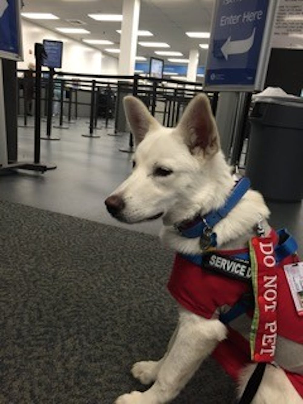 <p>Korra isa white German Shepherd puppy. Andrea Pino, a recentUNC graduate, adopted Korrato help her cope with the effects of her sexual assault. Courtesy of Andrea Pino.</p>