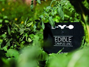 Edible Campus, with one site in front of Davis Library, works to help students know where their food is coming from.