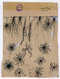 Ramón y Cajal, glial cells of the cerebral cortex of a child, 1904, ink and pencil on paper. Courtesy of Instituto Cajal (CSIC)