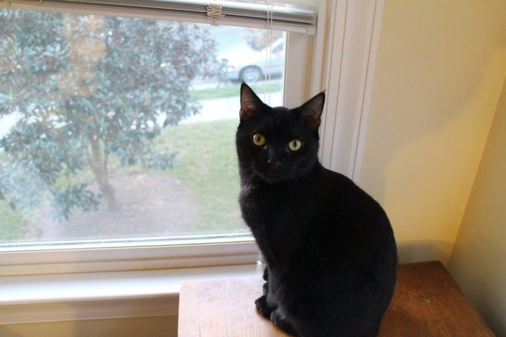 <p>Former editor-in-chief Tyler Fleming's cat, Ariel, poses for a photo.&nbsp;</p>