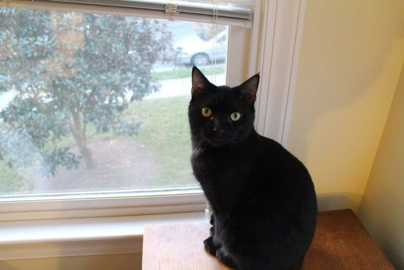 Former editor-in-chief Tyler Fleming's cat, Ariel, poses for a photo.