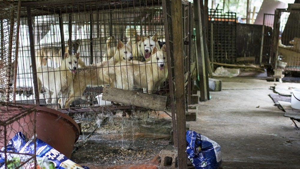 Dogs that were rescued from a dog meat farm in Jeonju, South Korea.