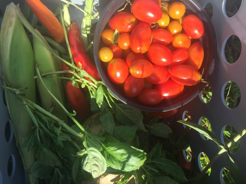 A harvest from the Eco-Institute farm. Photo courtesy of Abbey Cmiel.