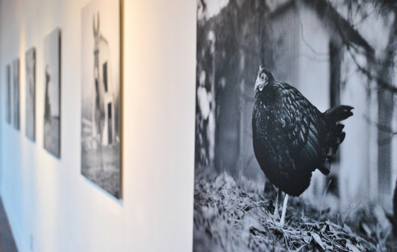 Sharon Lee Hart and Ashley Oates showcase their work in the Alumni Exhibition in the Allcott Gallery in Hanes Art Center. Their works theme represents rescued farm animals.