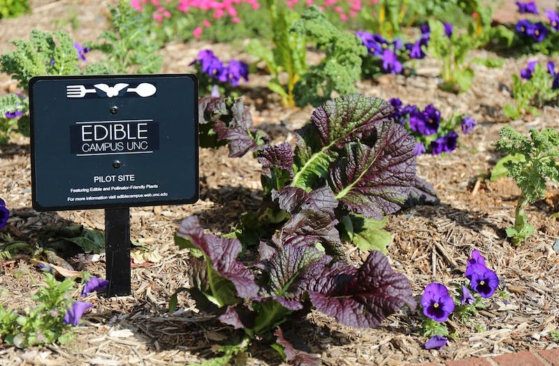 The Edible Campus project features edible and pollinator-friendly plants in nine different satellite gardens around campus. About 700 plants have been installed so far.