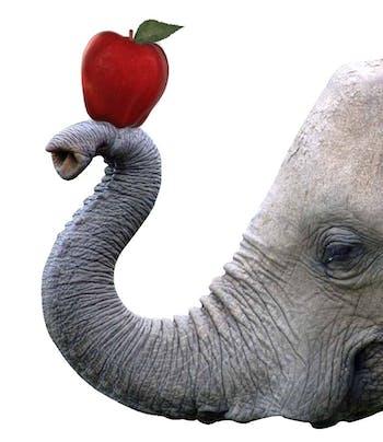 14327_elephant5f.jpg