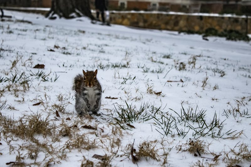 A squirrel takes in the winter wonderland in Polk Place.