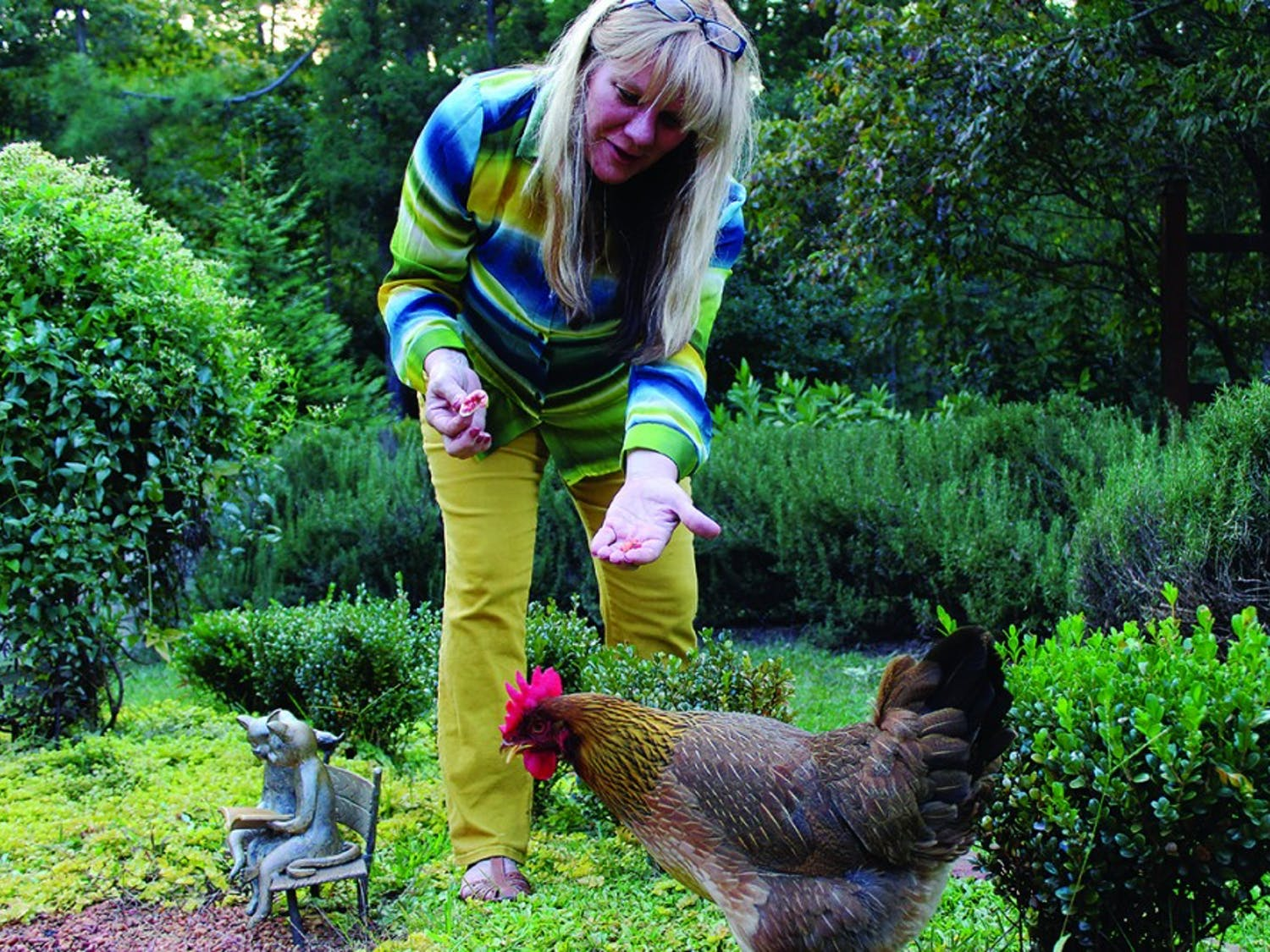 """Gigi Davidson with her chickens in her backyard on 9/9 in Pittsboro. """"I got the chickens when they were only day old chicks and now they are two years old. They are pretty easy maintenance and are great to have around"""" said Dede who graduated from UNC in 83'"""