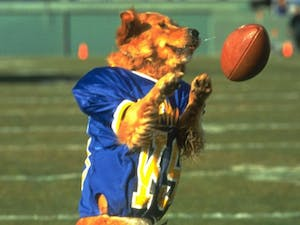 """""""Air Bud"""" may be the best sports movie of all timePhoto taken fromSports Illustrated"""