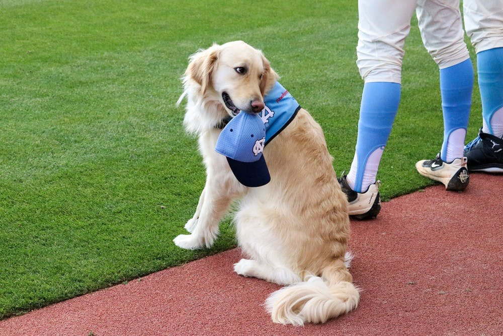 Meet the UNC baseball team's dog, the only facility service dog in the ACC