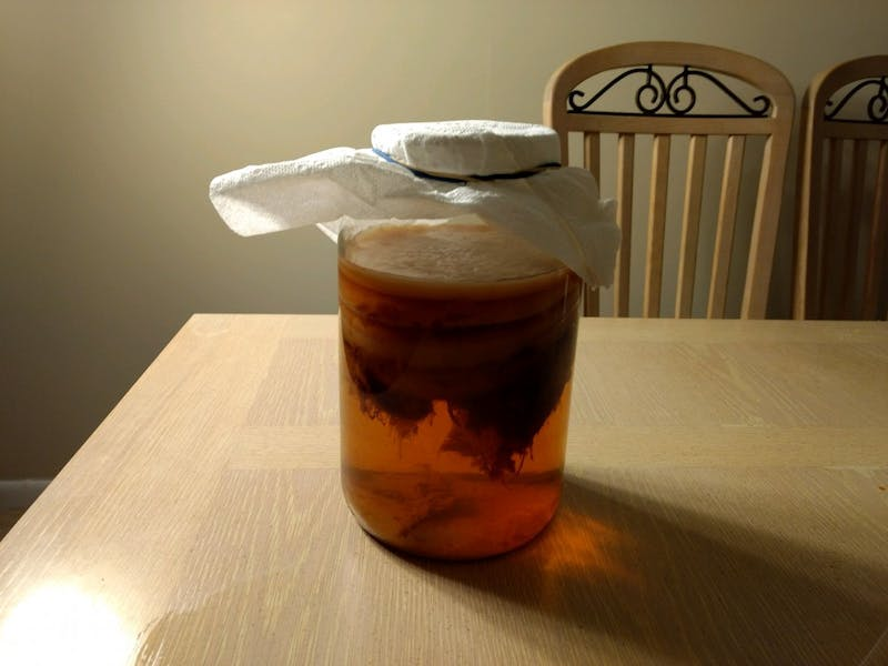 Princess Peach, the scoby pictured, is a fungus that feeds off sugar to produce a vinegary taste will produce kombucha after proper fermentation.