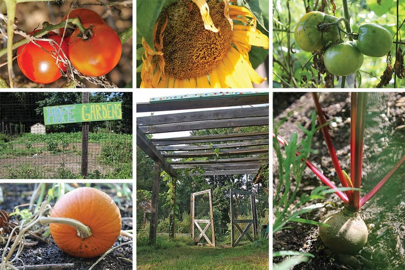 HOPE Gardens uses organic methods in agriculture to grow produce in vegetable plots and herb gardens. The land is owned by the town of Chapel Hill and the produce is for members of the community, including homeless and low-income people.