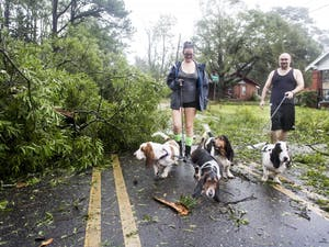 """John Fowler and Lee Voncanon take their pack of Basset Hounds out for a walk after hurricane Florence rips through their Wilmington, NC neighborhood on Friday, September 14th. """"I can't believe this hurricane brought down so many large trees, said Voncanon."""" Princess Place Ave. in Wilmington was made impassable for cars due to numerous downed trees and power lines. Much of the roads across Wilmington and Southeastern North Carolina are closed due to downed trees, downed power lines, and flooding. Wilmington officials have informed the public, that in some cases, it could take weeks to restore power to the area."""