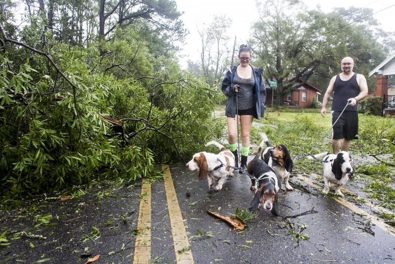 "John Fowler and Lee Voncanon take their pack of Basset Hounds out for a walk after hurricane Florence rips through their Wilmington, NC neighborhood on Friday, September 14th. ""I can't believe this hurricane brought down so many large trees, said Voncanon."" Princess Place Ave. in Wilmington was made impassable for cars due to numerous downed trees and power lines. Much of the roads across Wilmington and Southeastern North Carolina are closed due to downed trees, downed power lines, and flooding. Wilmington officials have informed the public, that in some cases, it could take weeks to restore power to the area."
