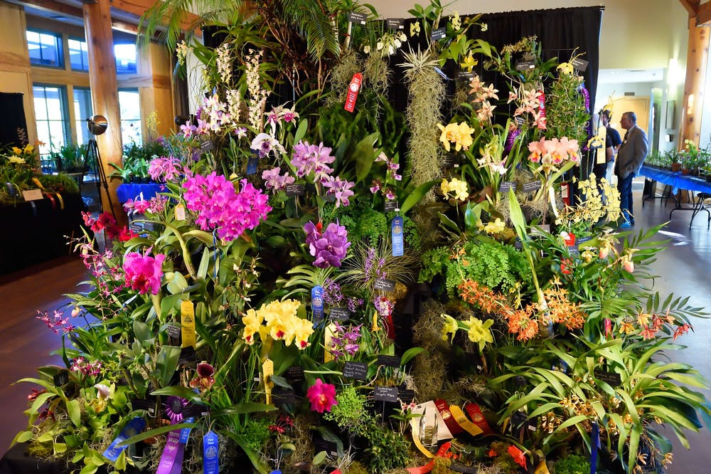 Orchids bloom into the Triangle at the 5th Annual 'Fall for Orchids' show