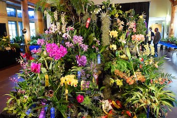 The Triangle Orchid Society competing at an orchid show. Photo courtesy of Chris and Don MacAskill.