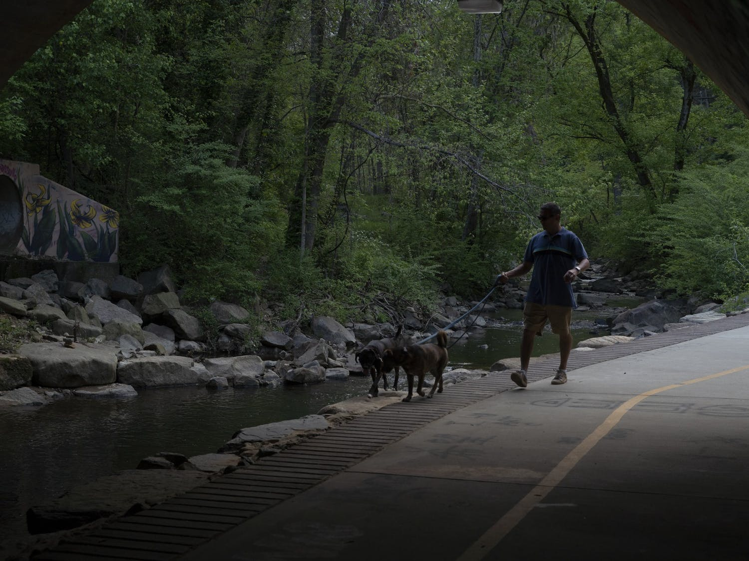 A man walks his dogs by the creek at Umstead Park on April 13, 2021.