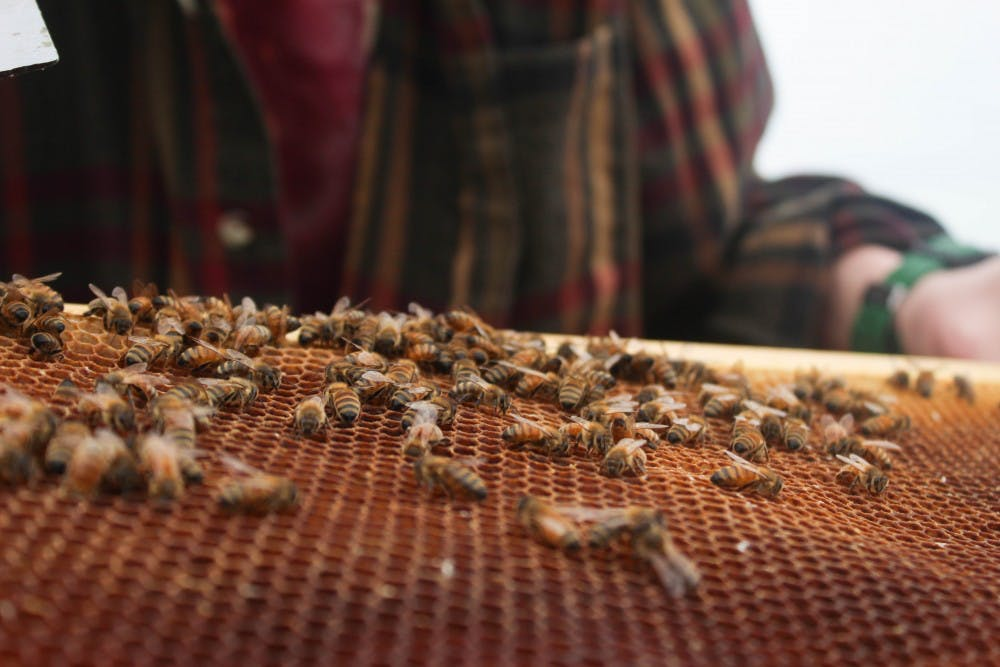A proposed N.C. bill is causing some buzz in the beekeeping community