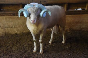 """Rameses stands in a barn at his """"forever home"""" of Magnolia Farms."""