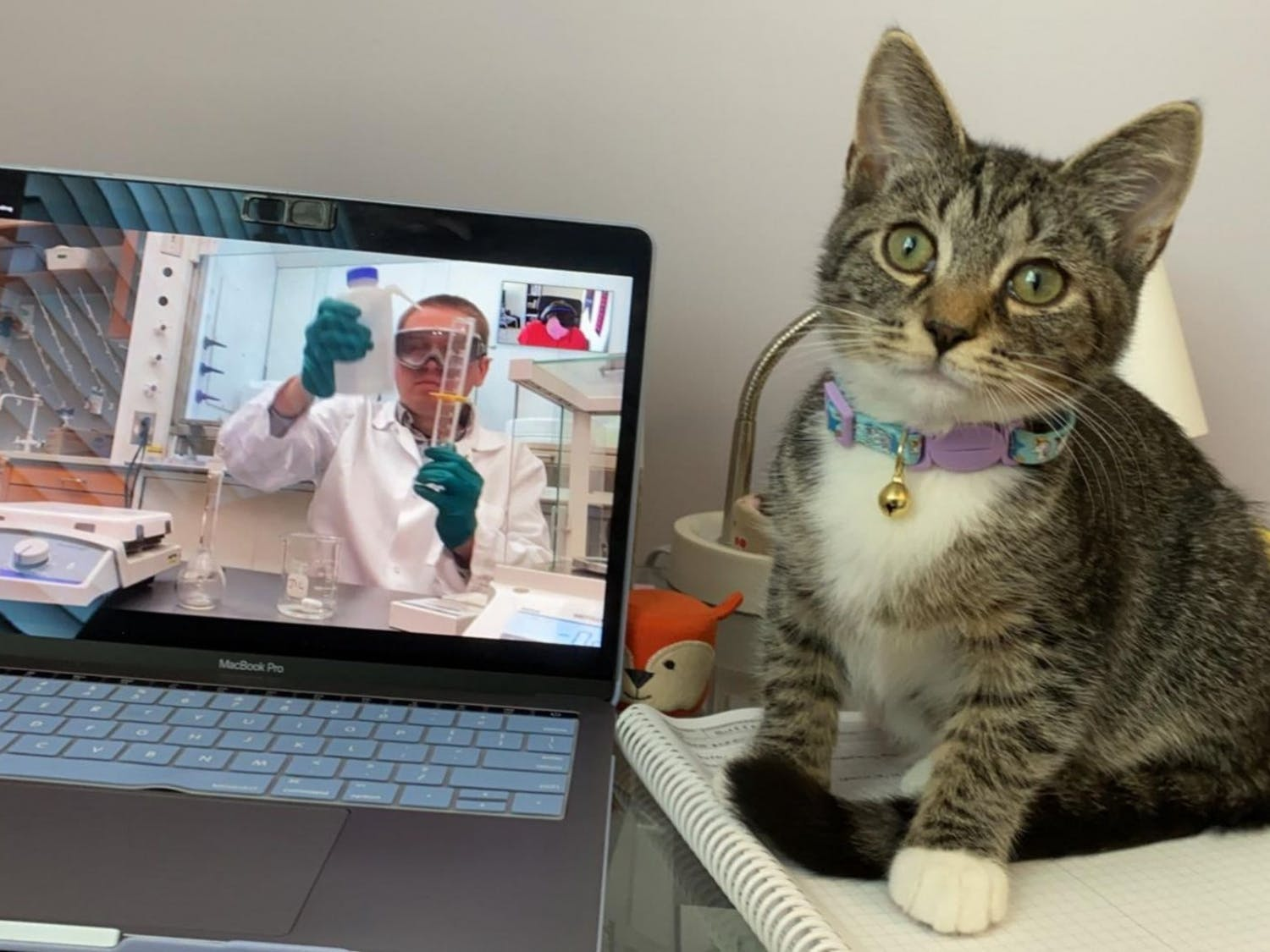 With classes being online, many students have found comfort in having their pets with them during Zoom meetings. Photo courtesy of Sara Meehan.