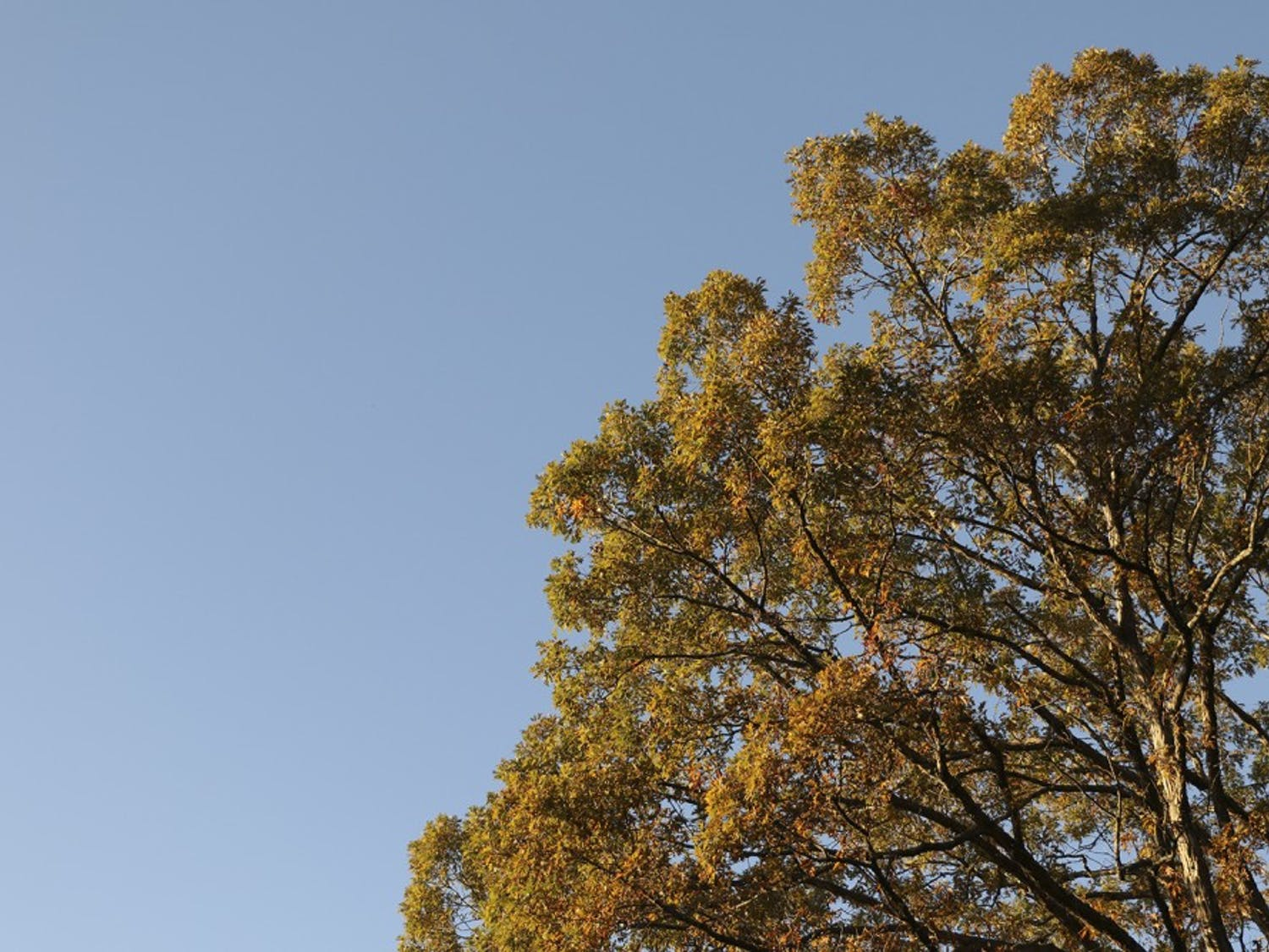 Chapel Hill will celebrate Arbor Day, a day to recognize trees and their importance,on Nov. 18.