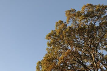 Chapel Hill will celebrate Arbor Day, a day to recognize trees and their importance, on Nov. 18.