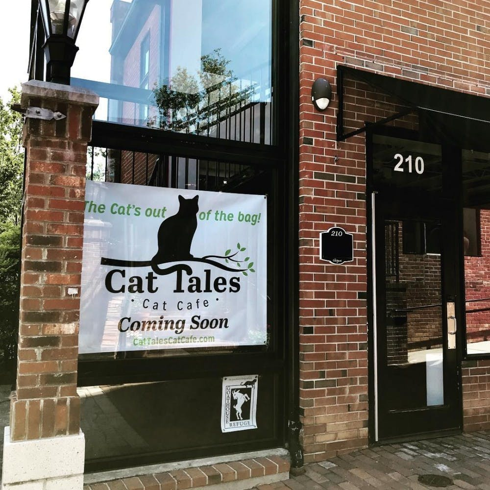 Looking for a new pet? Cat Tales Cat Cafe is set to open on Franklin Street this fall