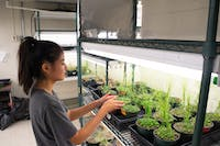 Brianna Chan, a first-year environmental health major, monitors the health of the plants in Coker Hall.