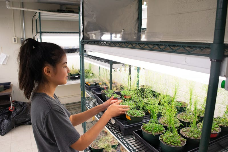 Brianna Chan, a first year environmental health major, monitors the health of the plants in Coker Hall.