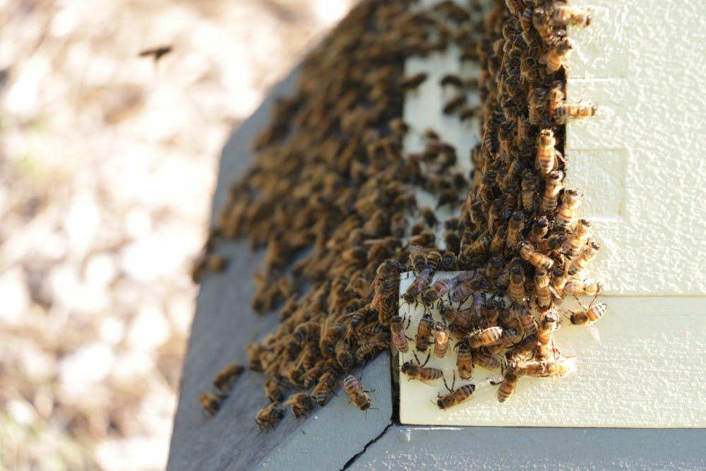 Chapel Hill abuzz with beekeepers