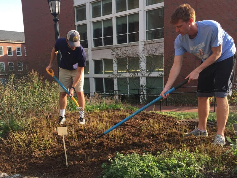 (From left) William Welbourne, a junior biology major and Danny Kelly, a senior history major, tend to a medicinal garden located near the Health Sciences library.