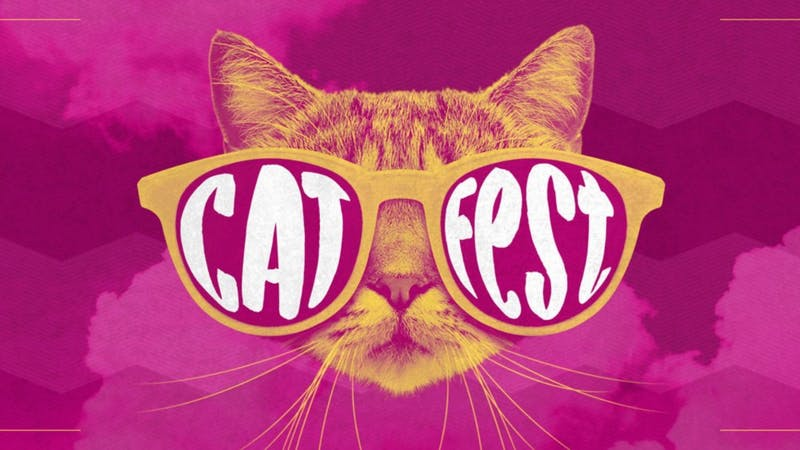 Cat Fest will occur in Raleigh on Oct. 5. Photo courtesy of Pam Miller.