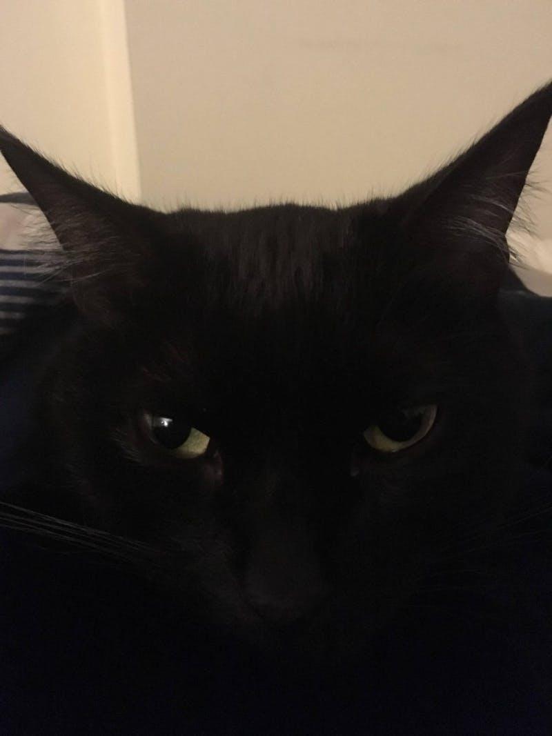 Ariel is Alexander Peeples' cat. Peeples believes he would do well on the UNC Board of Governors. DTH/Alexander Peeples
