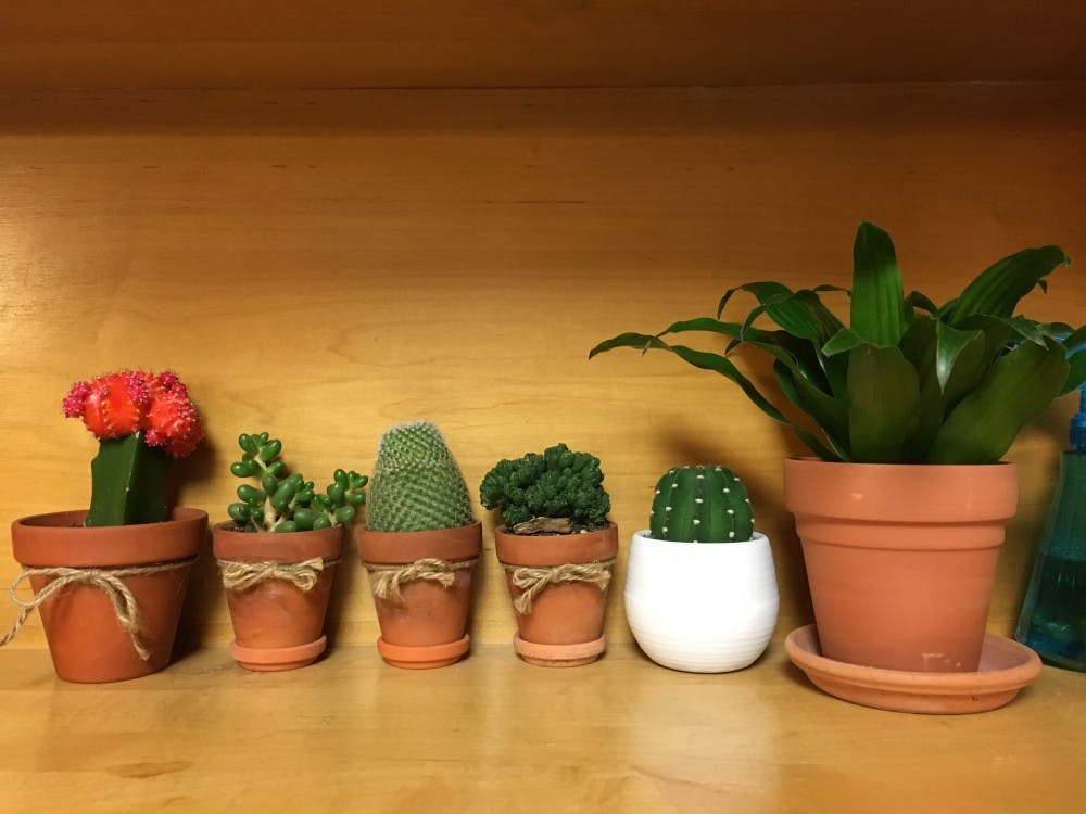 First-years use plants to make dorm rooms feel more like home