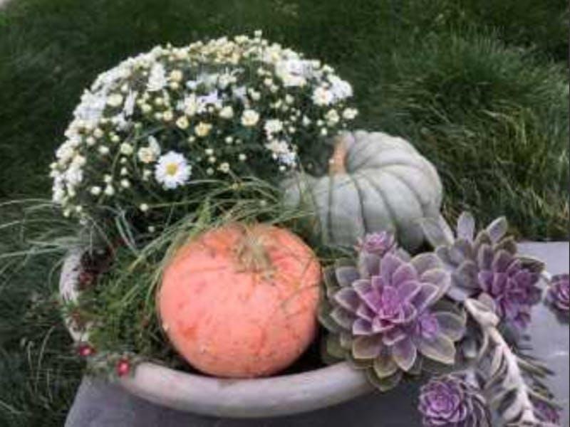 Sarah P. Duke Gardens' will host its Harvest Festival on Sunday. Photo courtesy of Kavanah Anderson.