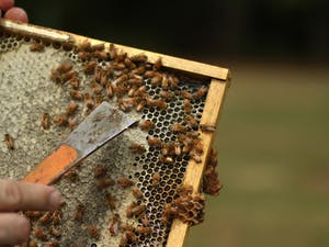 Jeff Lee, owner and beekeeper of Lee's Bees, removes a tray of bees from their hive.