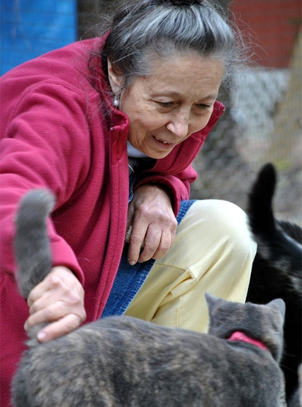 <p>Siglinda Scarpa, founder of the Goathouse Refuge, stops to pet one of around 200 cats that live at the rescue.</p> <p><br></p>