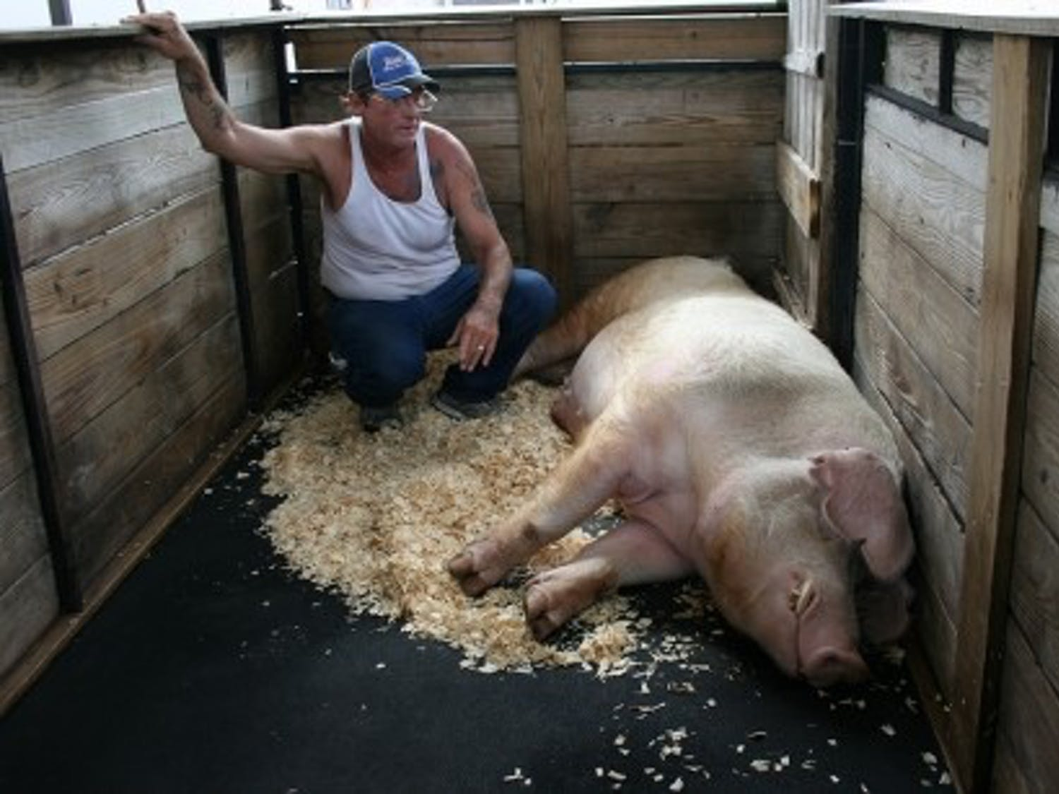 File photo ofJohn Wadsworth, along with Bubba the pig, from the 2013 state fair.