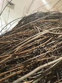Patrick Dougherty will begin working on a sculpture made of sticks outside the Ackland.