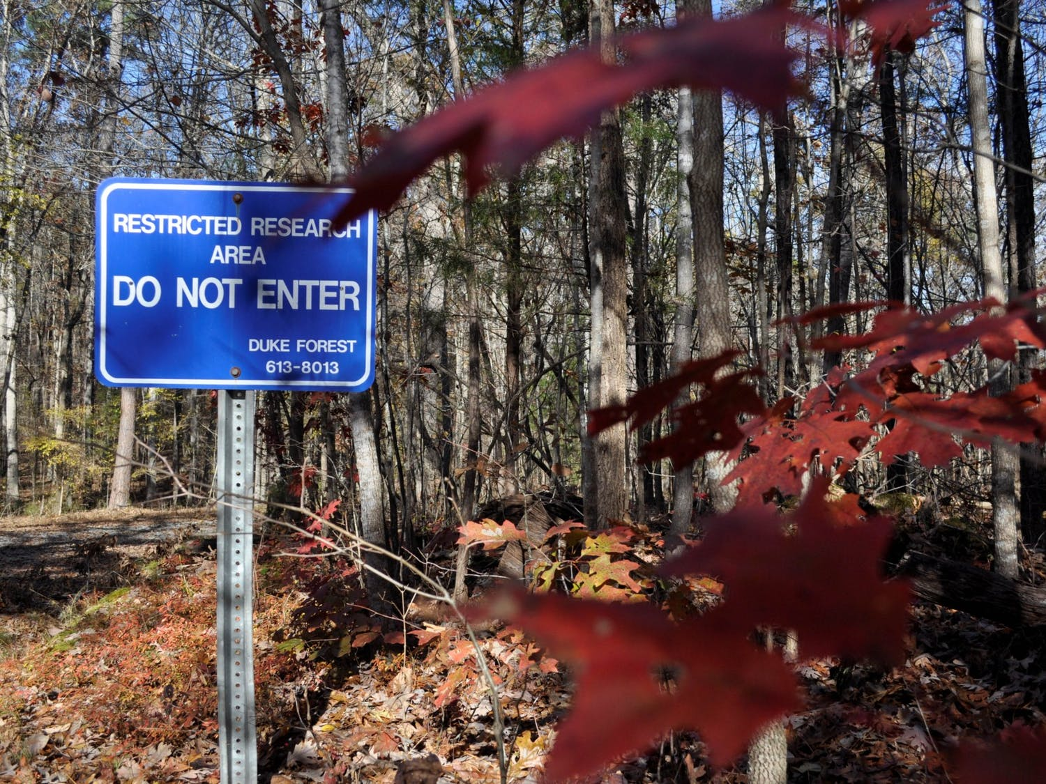 A sign marks the beginning of a restricted research area in Duke Forest located along Eubanks Road on Sunday, Nov. 24, 2019. Plans of developing land near the intersection of Eubanks Road and Old NC 86 raised concerns from residents about how Duke Forest's research and natural sites would be affected.