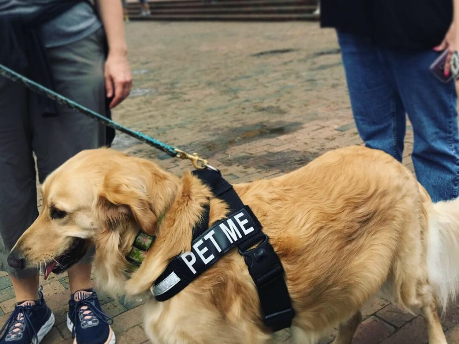 The Buddy Project teamed up with UNC Paws to host an event for Mental Health Awareness Week on Tuesday. Photo courtesy of Ally Yoder.