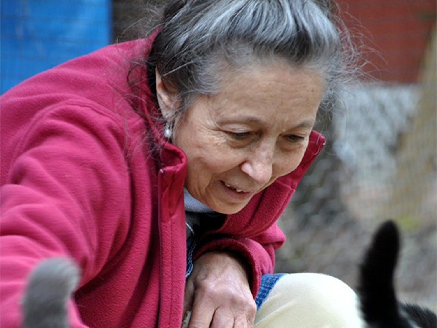 Siglinda Scarpa, founder of the Goathouse Refuge, stops to pet one of her around 200 cats.