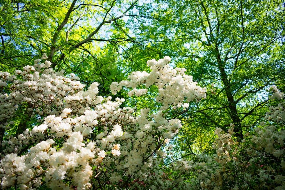 <p>Flowers grow in Coker Arboretum on April 21st, 2021.</p>