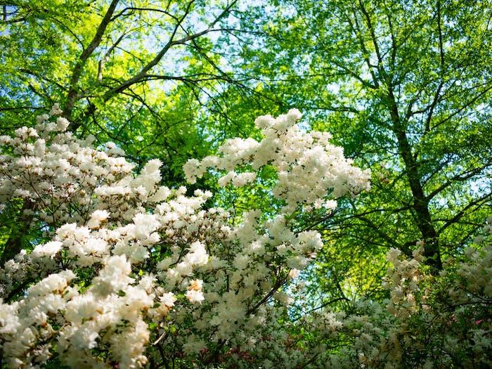 Flowers grow in Coker Arboretum on April 21st, 2021.