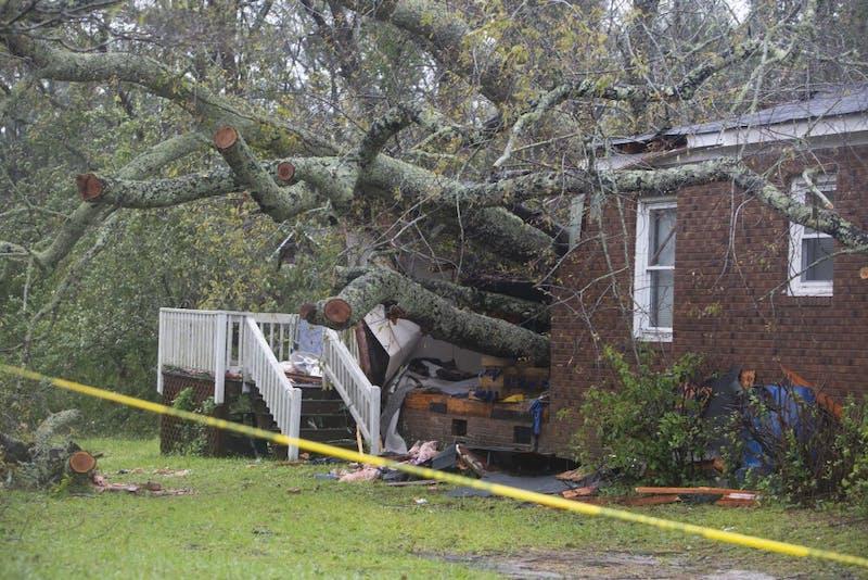 hurricane florence tree