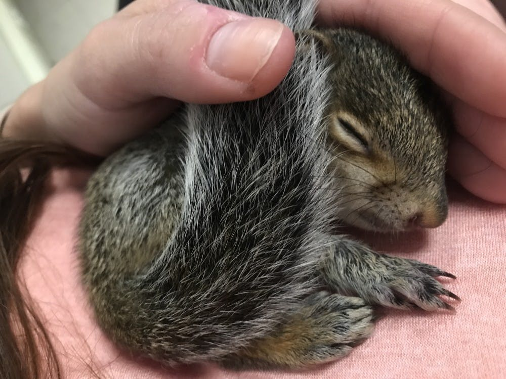 UNC faculty member makes unexpected bond with campus squirrel